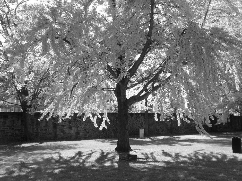erie street cemetery cleveland ohio
