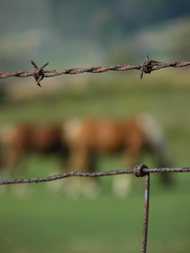 horses grazing in Hocking Hills, Ohio